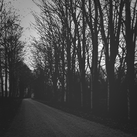 camminata fra gli alberi